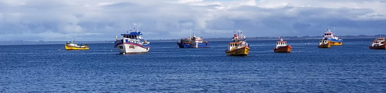 Pescar Artesanal 2 PW